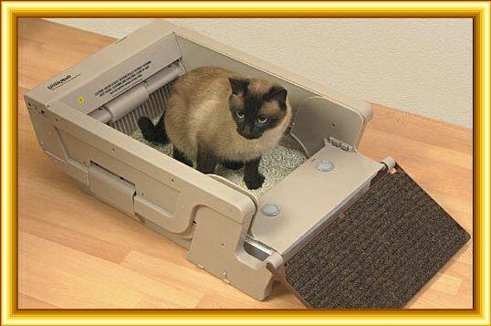 Как сделать кошачий лоток